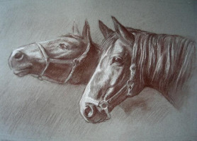 Tierportraits, Pferde